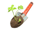 Gardening trowel and plant on a isolate.