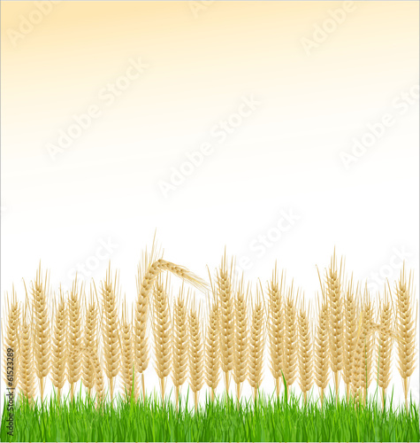 Wheat and grass