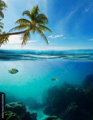 Tuinposter Koraalriffen Tropical underwater shot splitted with surface