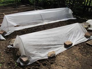 Spunbond hotbeds for vegetable seedlings against night frost