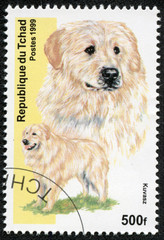 stamp printed in Republic of Chad shows dog(kuvasz)