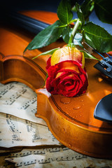 Violin sheet music and rose