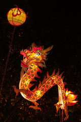 Dragon Lantern for Chinese New Year Celebration