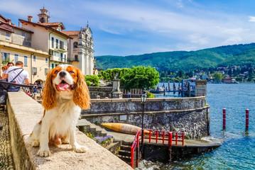 Hund auf Reisen (Isola Bella, Lago Maggiore)