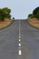 Elefant auf dem Highway,Chobe in Botswana