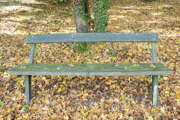 A Wooden Bench at a Park in Autumn, Germany
