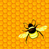 bumblebee and honeycombs