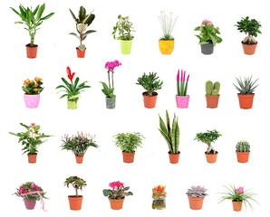 Pflanzen Collage