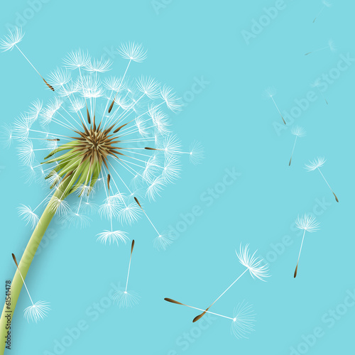 White dandelion with pollens isolated - 61541478