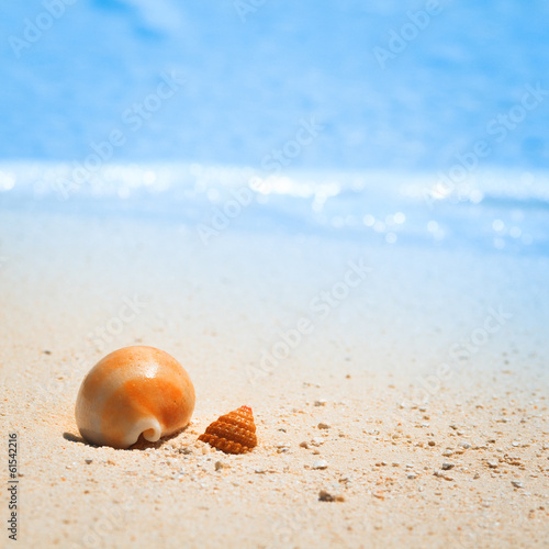 Shell on tropical beach