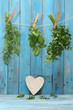 Assorted hanging Herbs on an old and vintage wooden blue