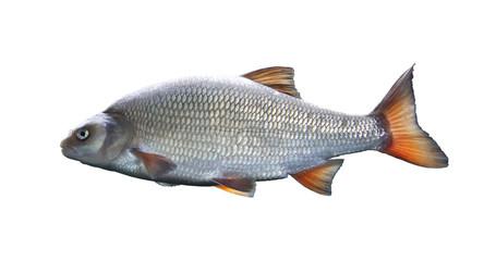 Weißfisch