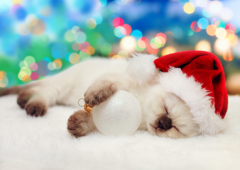 Little kitten wearing santa hat sleeping against Christmas tree