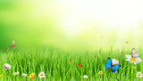 Fototapety Spring meadow