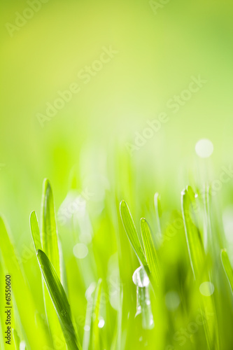 Detail of grass