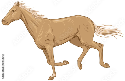 Isolated galloping palomino