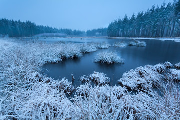 frosty winter morning over swamp