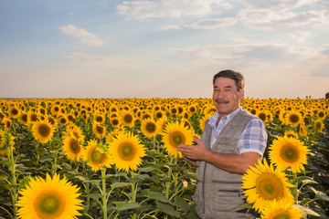 farmer standing in a sunflower field, looking at the crop