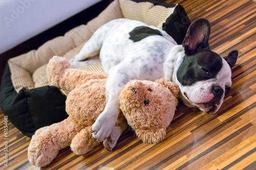 Fotobehang Dragen French bulldog puppy sleeping with teddy bear