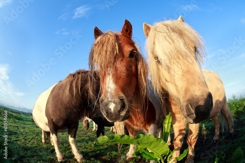 cute funny pony via fish-eye