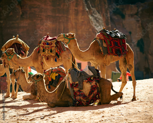 Camels caravan in the desert