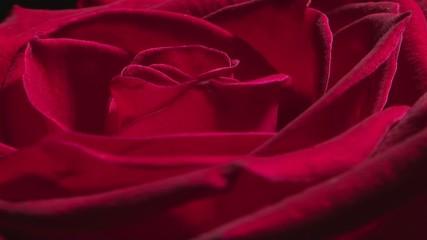Rotating rose