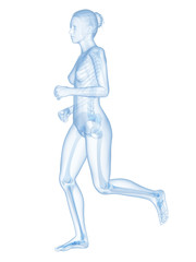 medical 3d illustration - jogging woman - visible skeleton