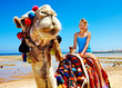 Tourists riding camel  on the beach of  Egypt.
