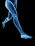 medical 3d illustration - jogger´s legs - visible bones
