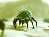 medical 3d illustration - typical dust mite