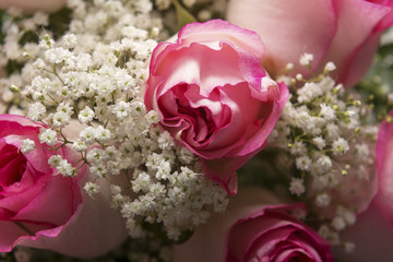 Pink Roses and Baby's Breath Closeup