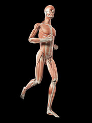 medical 3d illustration - male jogger - muscle system