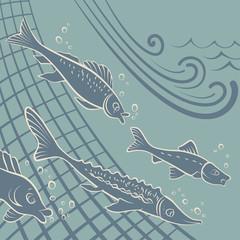 Fishfree