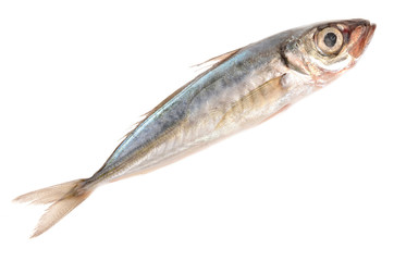 horse mackerel on a white background