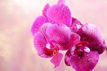 Belle floraison d'orchidées sur fond clair de couleur