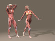 Human man and woman anatomy
