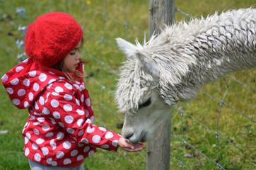Little girl feed animal