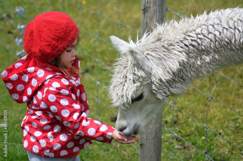 Little girl feed animal