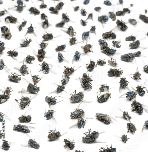 Close-up of a group of dead flies, isolated on white