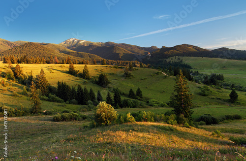 Landscape with meadow and forest