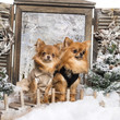 Two dressed-up Chihuahuas on a bridge, in a winter scenery