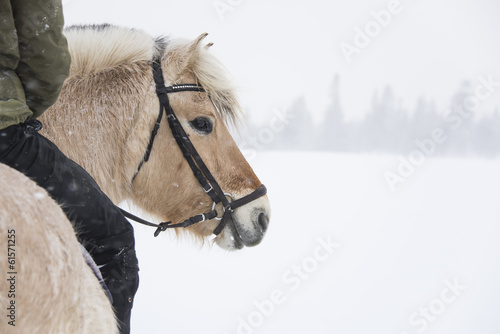 Riding in a winter landscape