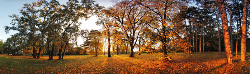 Autumn panorama in park