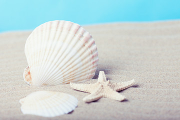 Sea shell and starfish on a beach