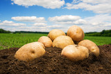 Potatoes on the ground under blue sky