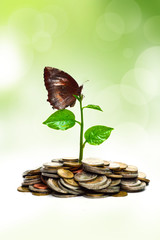 trees growing on coins with a butterfly / csr