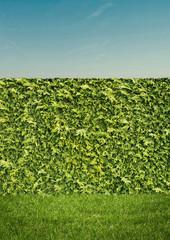 Hedge on Cear Sky