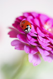 Beautiful ladybird on flower