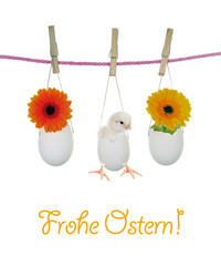 Frohe Ostern - Küken und Gerbera