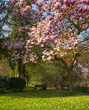 Magnolieinbaum